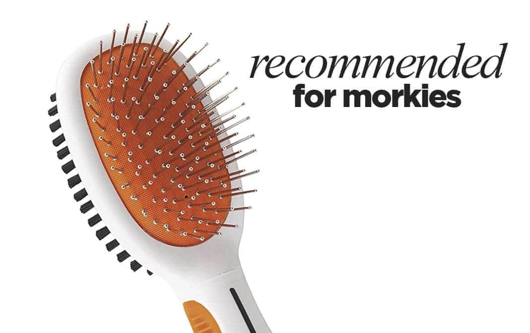 Best Brush for Morkie Dogs