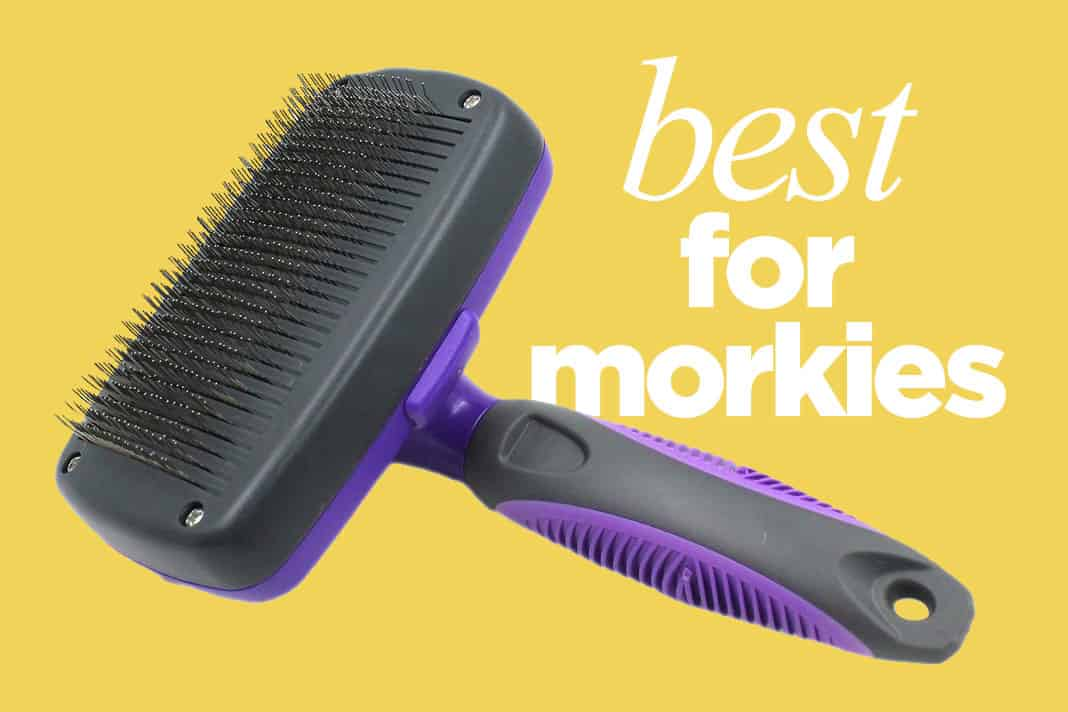 Morkie Brush