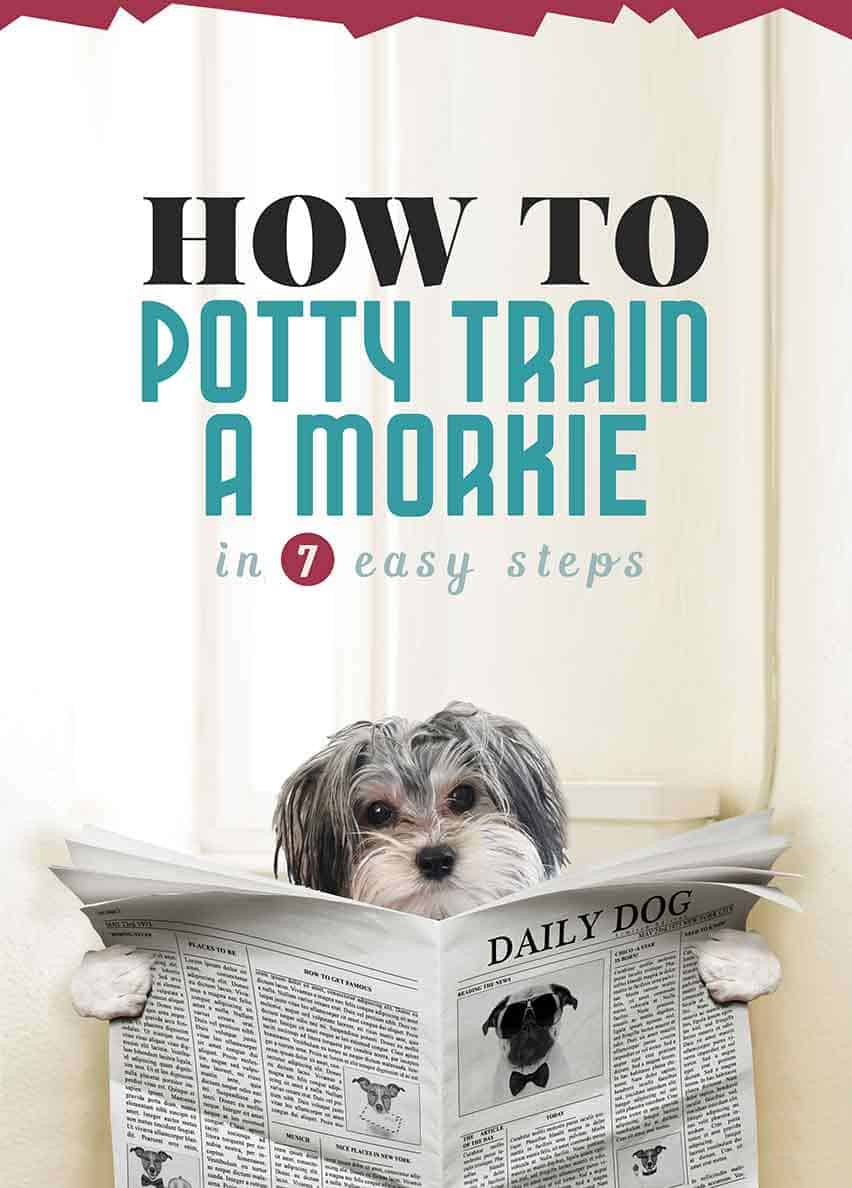 How To Potty Train A Morkie Puppy In 7 Easy Steps