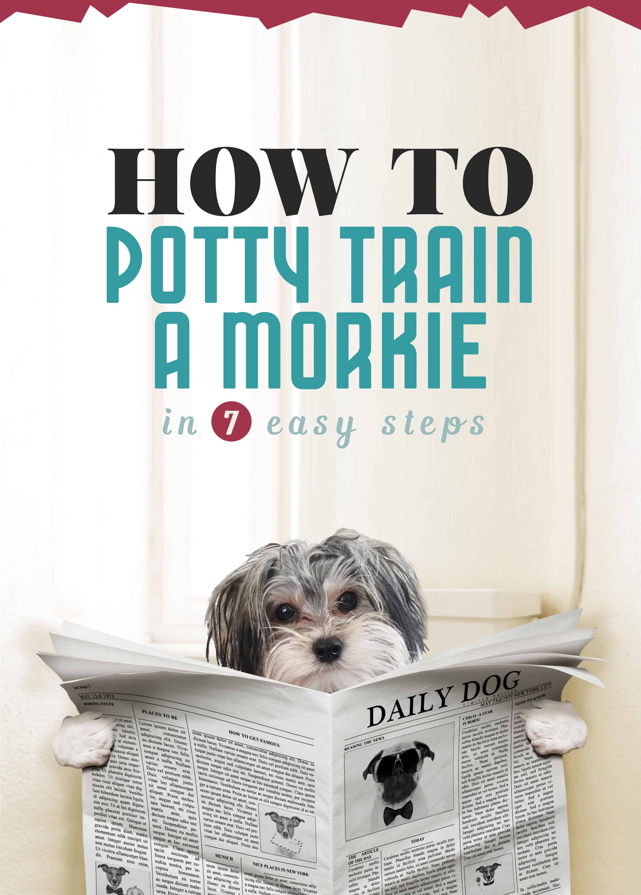 how to potty train a puppy to go outside