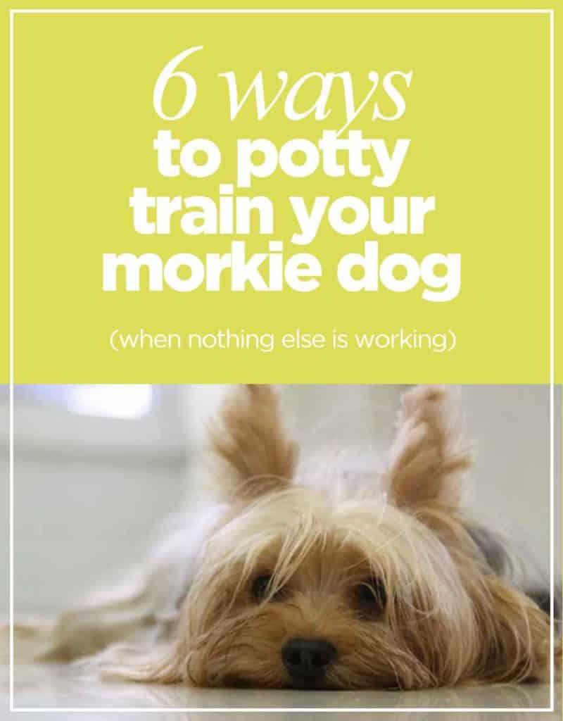 Morkie Potty Training